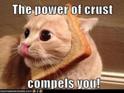 Lolcats: You Can't Resist His Holy Wheatiness!