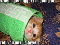 When I get bigger I'm going to roll you up in a towel. LOLCat