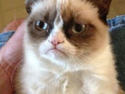 Tard the Grumpy Cat, A Sour Faced Kitten That Isn't Really… http://bit.ly/OiKefX