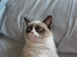 Good evening from Grumpy Cat http://bit.ly/PSF0tq