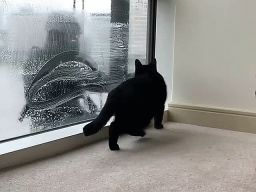 Black Cat & Window Washer
